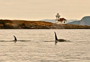 lighthouse-orcas1